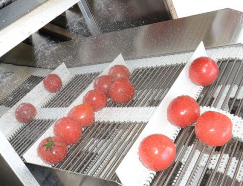 Essential Pretreatment of Fruit and Vegetable